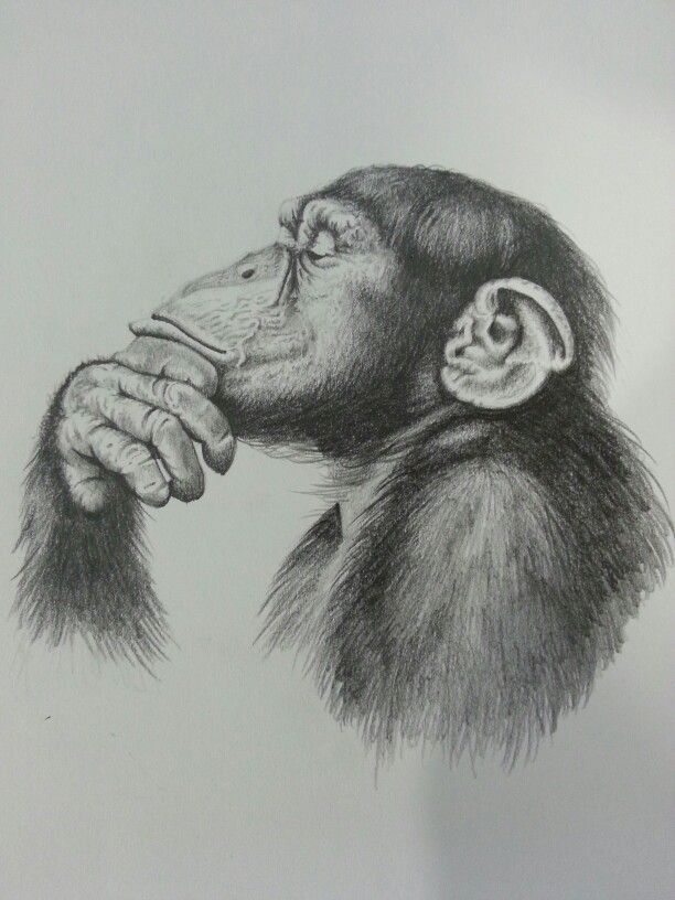 The Thinker. Pencil drawing. | Monkey portraits ...
