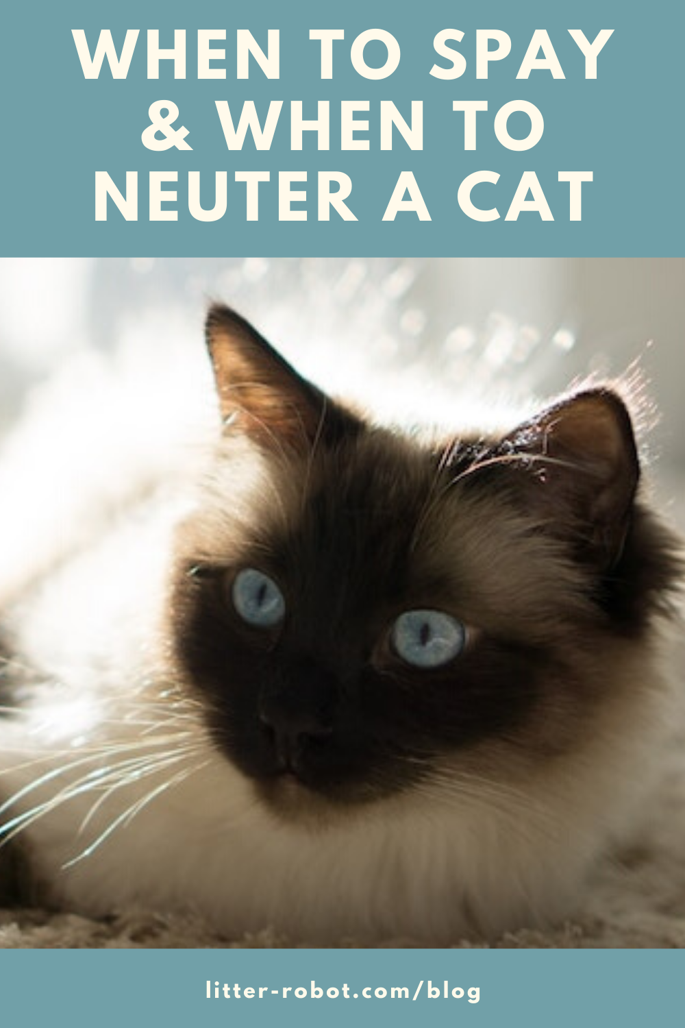 When To Spay When To Neuter A Cat Litter Robot Blog In 2020 Cats Cancer In Cats Neuter
