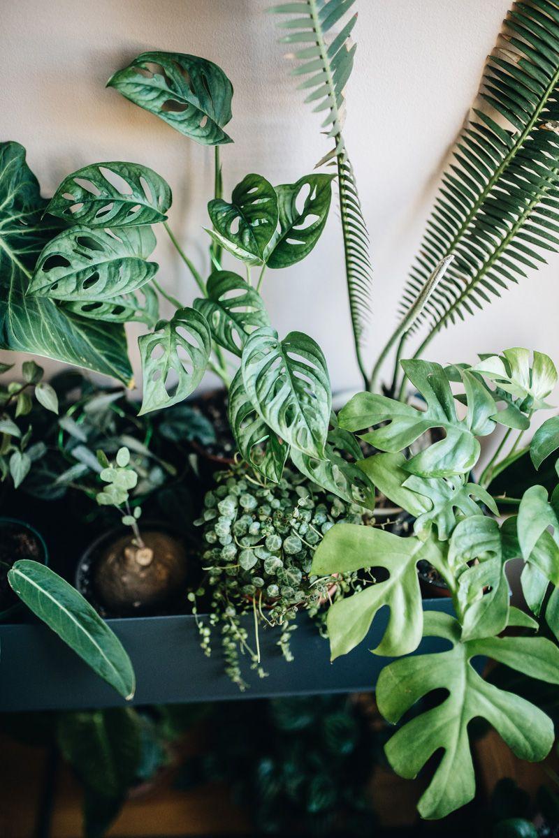 Arredare con le piante fa bene: lo spiega il libro Plant ...