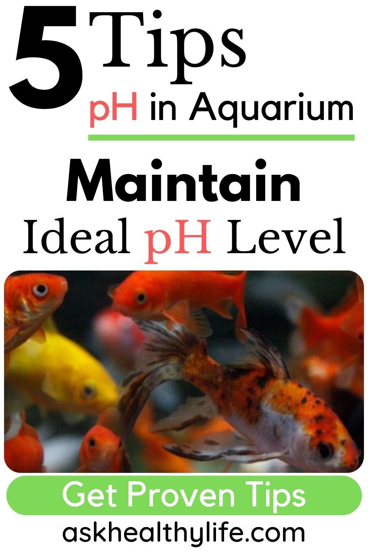 5 Things To Do Maintain Ideal Ph Level In Freshwater Aquarium Get Proven Tips Freshwater Aquarium Aquarium Fish Tank
