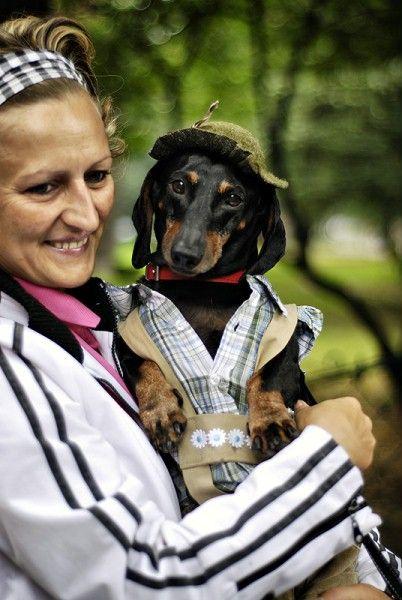 Polish Sausages Dachshund Weiner Dog