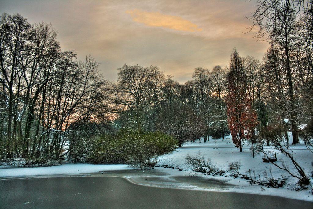 Dortmund Rombergpark Im Winter 01 Dortmund Landschaftsbau Garten Landschaftsbau