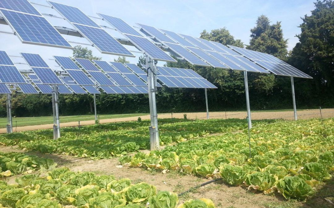 Doubling Up Crops With Solar Farms Could Increase Land Use Efficiency By As Much As 60 Anthropocene Solar Farm Solar Solar Panels