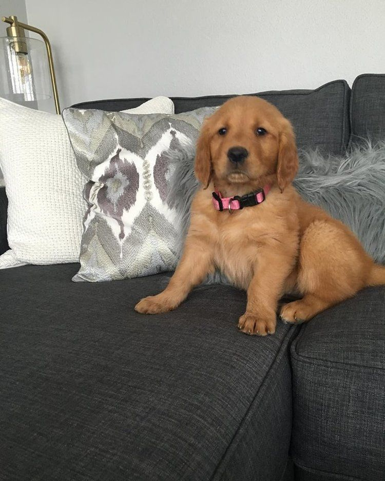 Check out this blog and fall in love with golden
