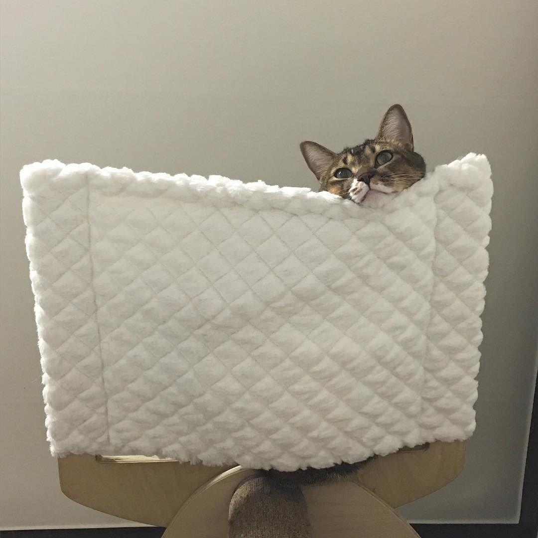 아코코  2016.04.01 am 12:42 #머녀머녀머머이 #멍멍이 #고양이 #냥스타그램 #캣스타그램 #cat #catstagram #catsofinstagram #cats_of_instagram #instacat #neko #ねこ #猫 by bamung