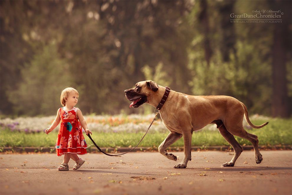 Incredible Photo Series Shows Huge Dogs Playing With Their Tiny
