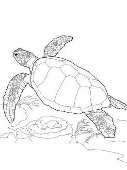 Loggerhead Turtle Coloring Page Boyama Sayfalari Cizim