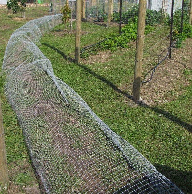 Hühnerhaltung Im Garten hühnertunnel aus volierendraht selber machen haustiere