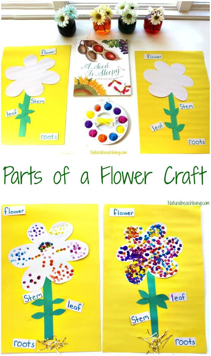 the best parts of a flower craft for preschool and kindergarten flower crafts for kids are perfect for learning about flowers flower science preschoolers [ 700 x 1181 Pixel ]