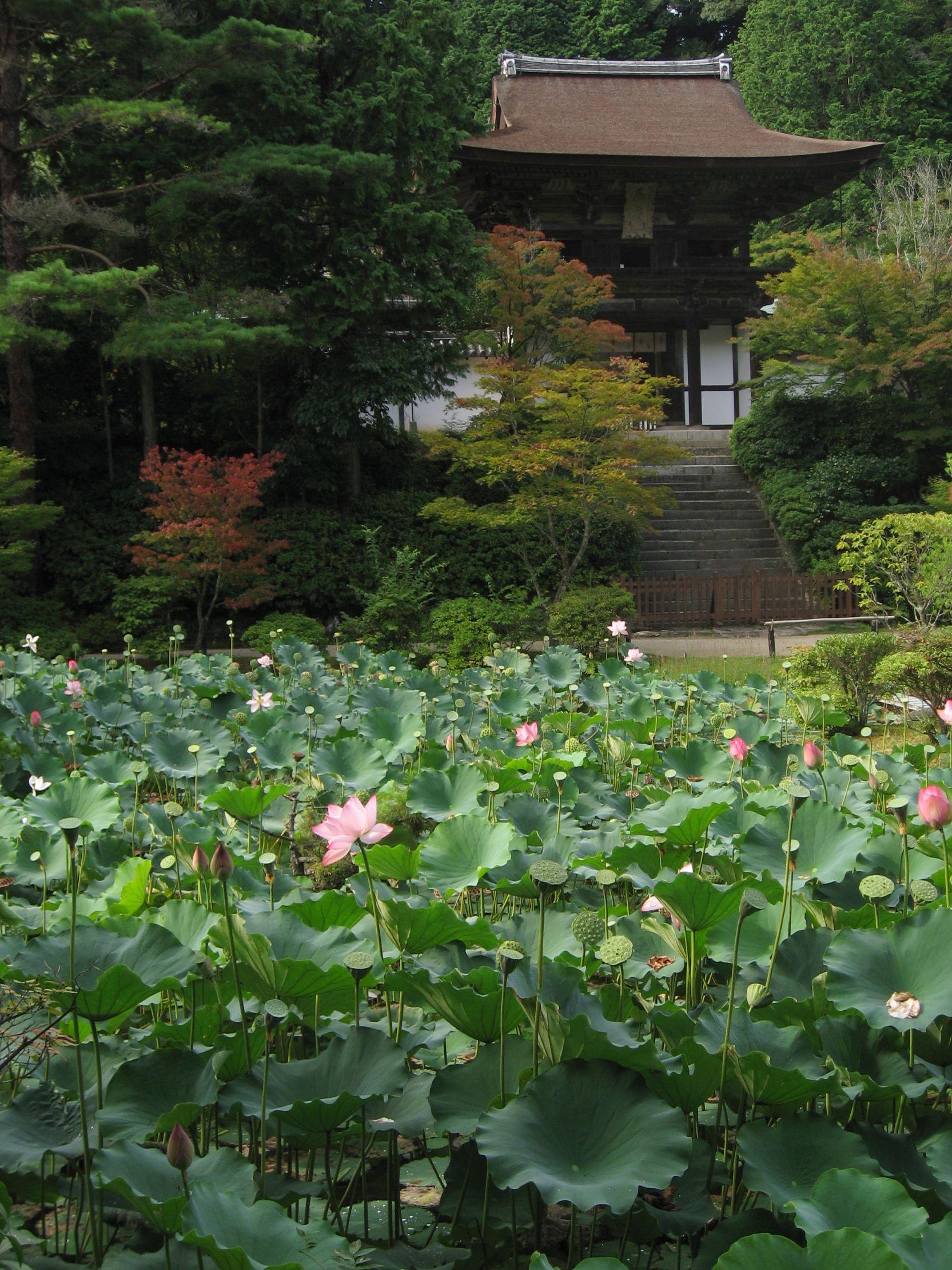 Lotus Pond At Enjo Ji, A Heian Period Paradise Garden (12Th