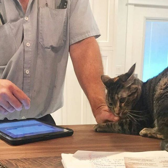 50 Cats Confessing Crimes - Funny Cat Shaming