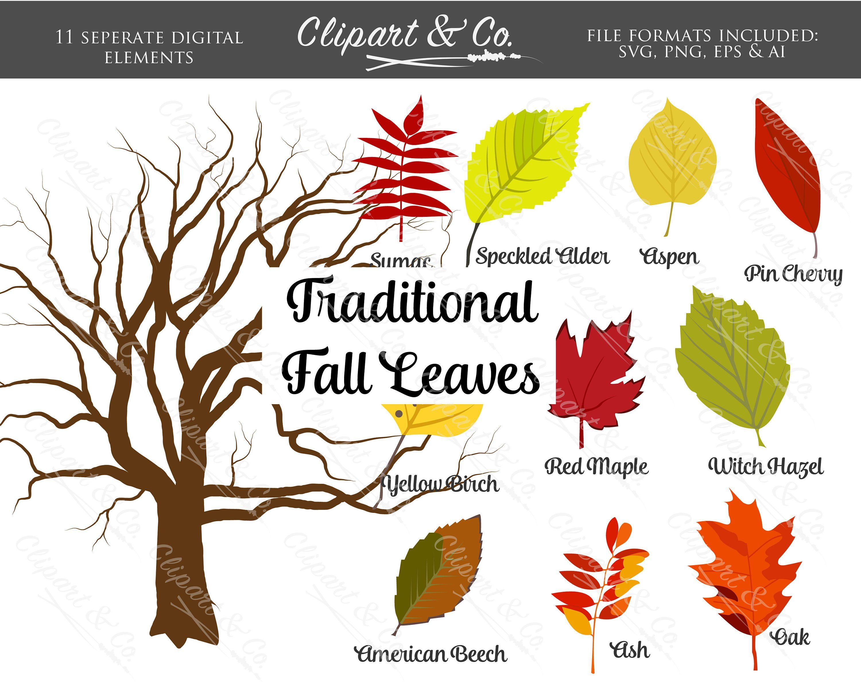 Fall leaves modern. Traditional clipart tree clip