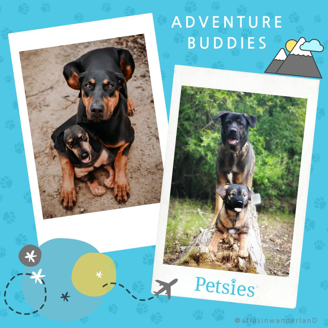 Pet Plushies On An Adventure Custom Stuffed Animal Pets Your Pet