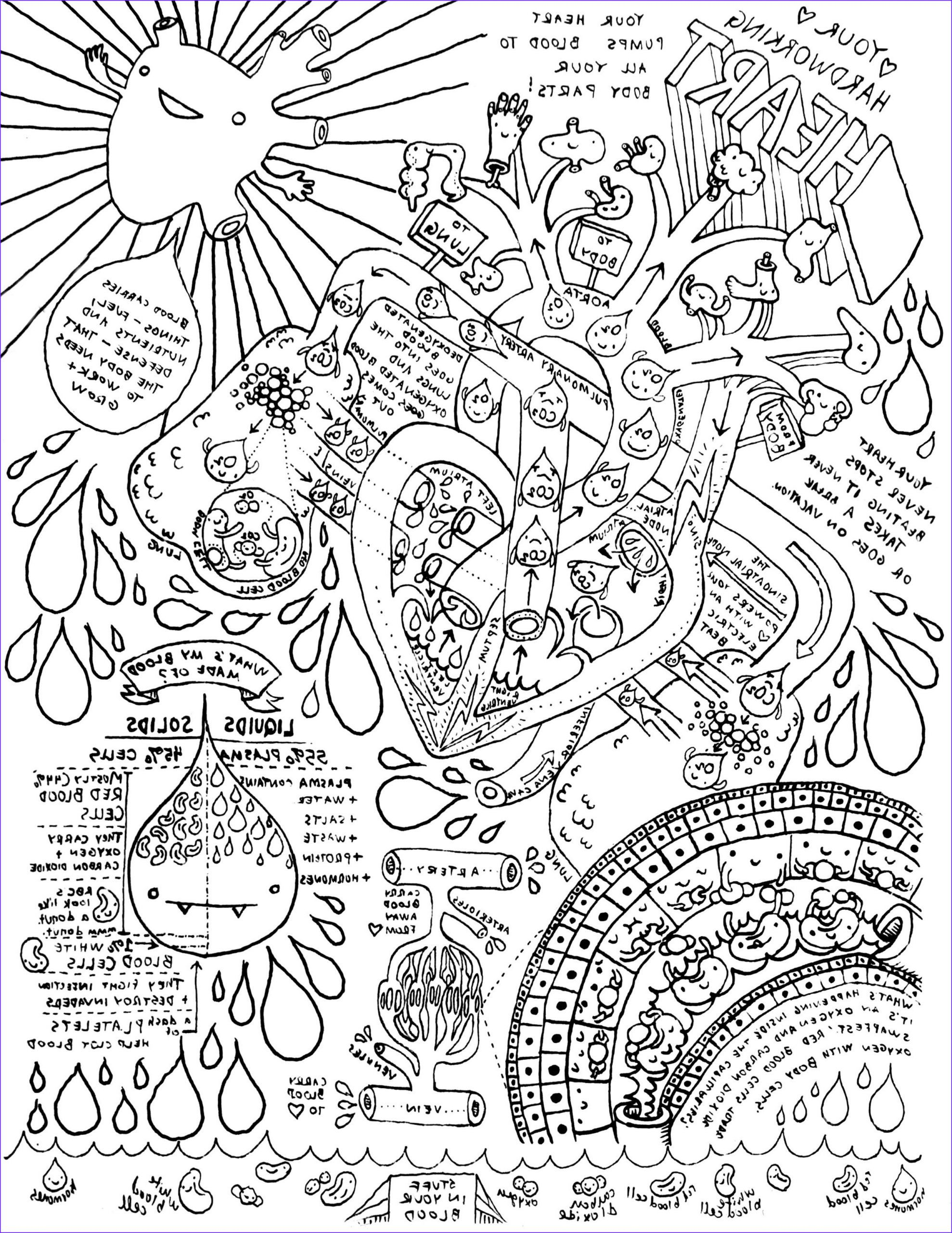 13 Cool Anatomy And Physiology Coloring Workbook Body