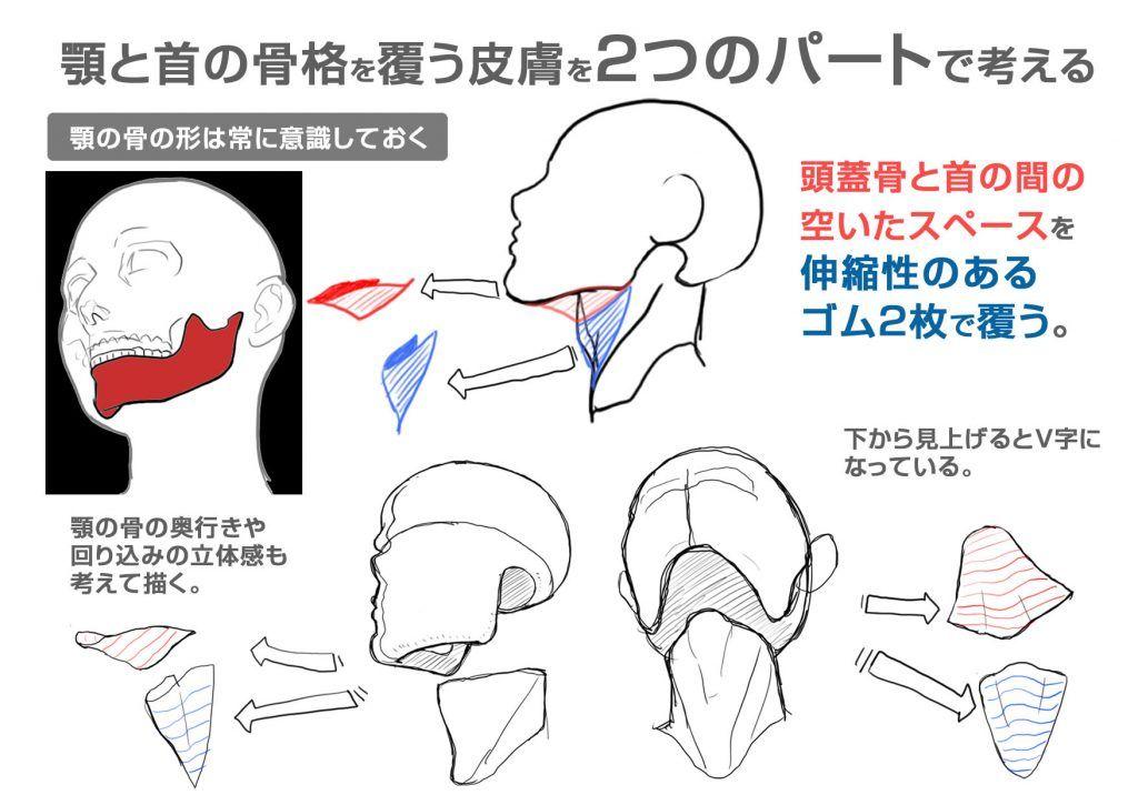イラスト豆知識顎の描き方 ビジネスアニメ Drawing Tips And