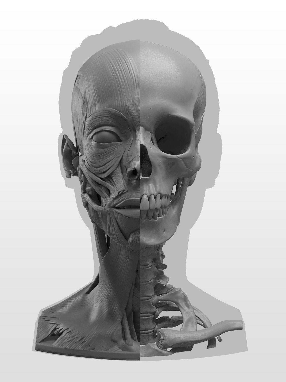 New Masters Academy: Anatomy of the Head Series | Cuadros ...