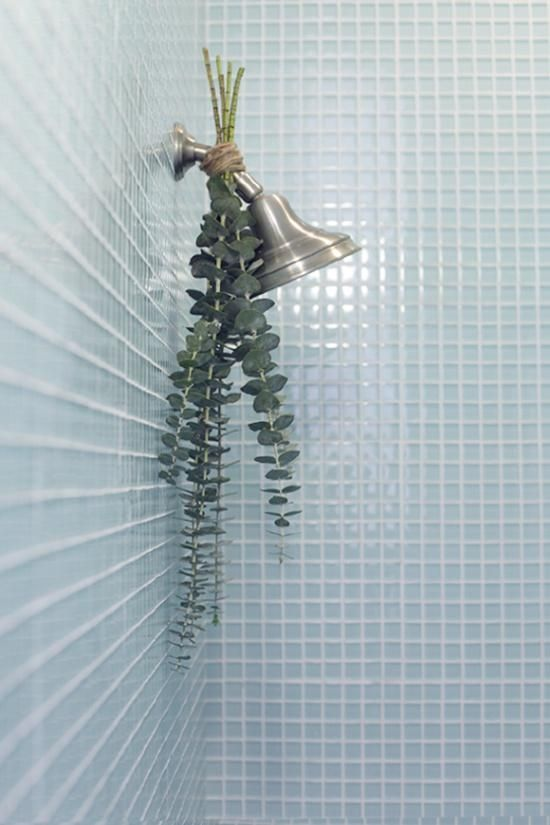 hang eucalyptus in the shower for natural aroma therapy.. good idea:)                                                                                                                                                                                 More