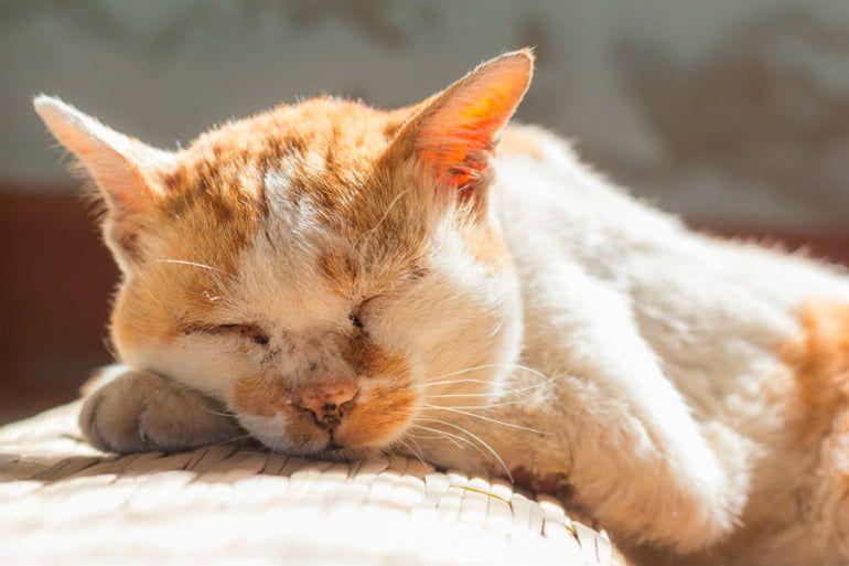 160 Ideas De Imágenes De Gatos Imagenes De Gatos Gatos Felino