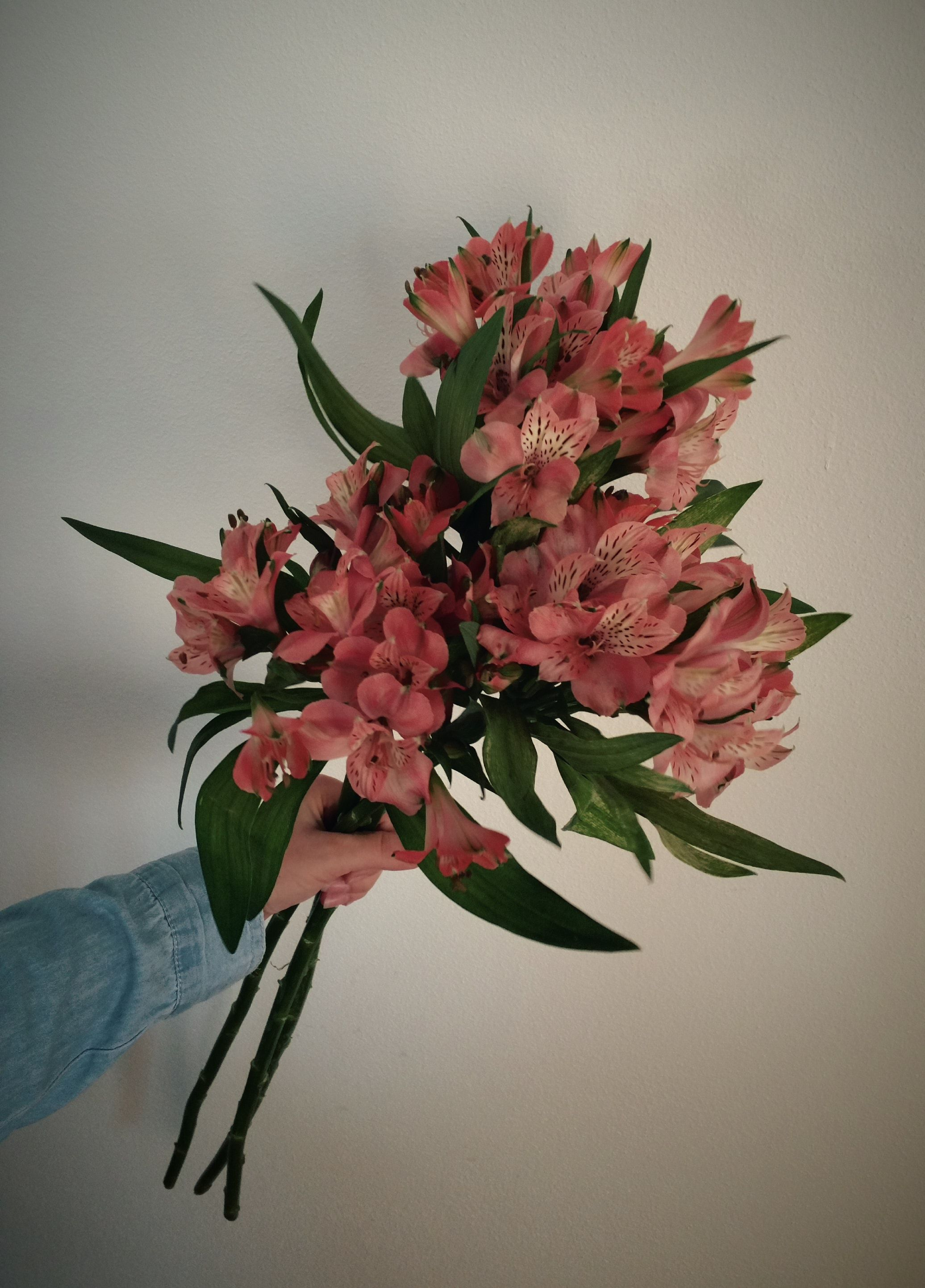 Beautiful Flowers For A Beautiful Women Beautiful Flowers