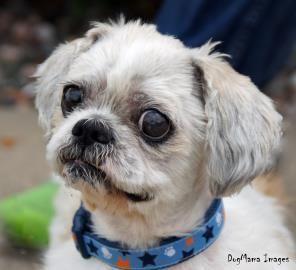 Adopt Dewey On Cute Dogs Funny Animals Pets