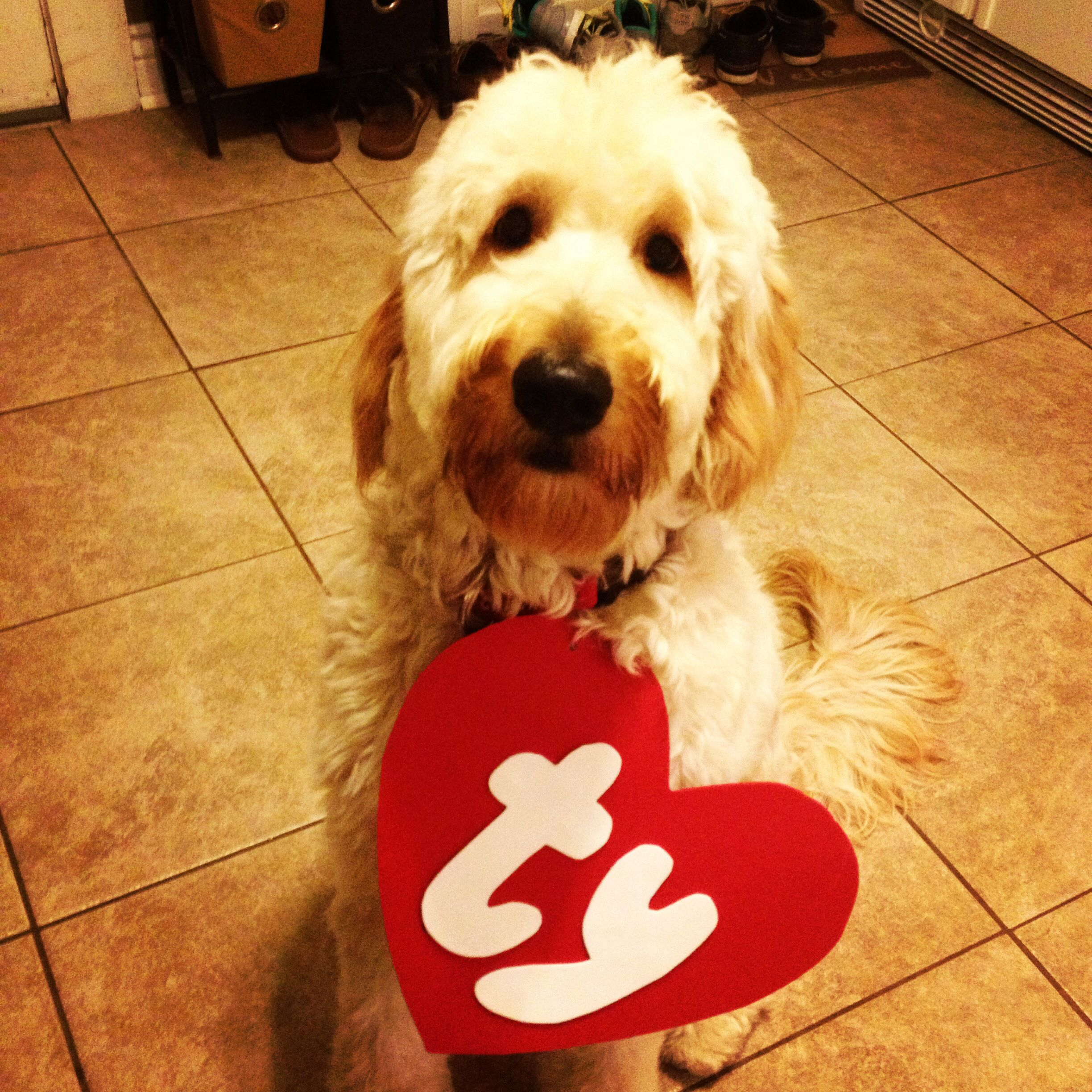 source best ty beanie baby dog halloween costume image collection