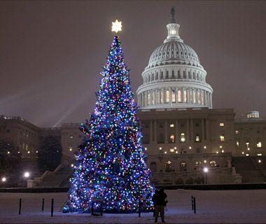 America S Tallest Christmas Trees Christmas Tree Lighting Christmas Tree National Christmas Tree