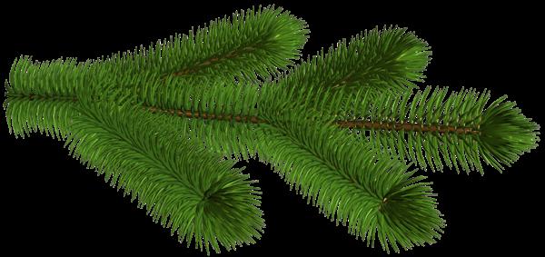 Gallery Recent Updates Pine Branch Clip Art Tree Branches
