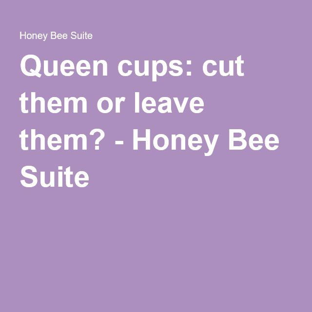 Queen cups: cut them or leave them? - Honey Bee Suite