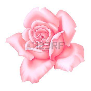 Dessin Fleur Rose Pink Flower Decorative Vintage Illustration