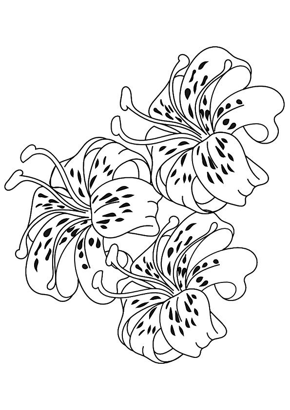 Print Coloring Image Momjunction Tiger Lily Asiatic Lilies Flower Tattoo