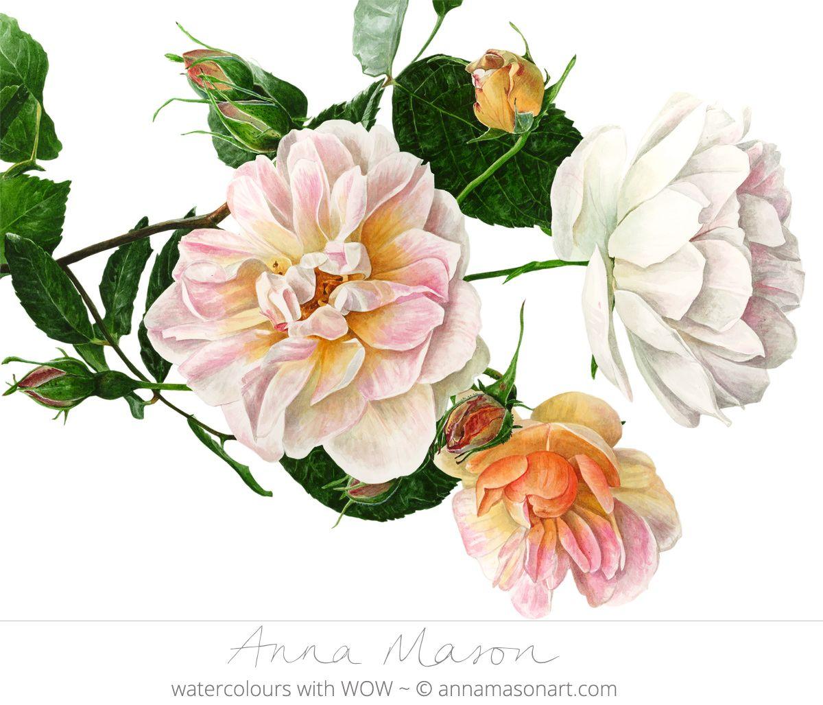 Portfolio anna mason art botanical prints pinterest anna