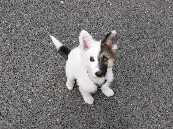 Dog Half Black Half White Face So Adorable Unique Animals