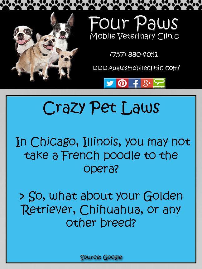 Crazy Pet Laws