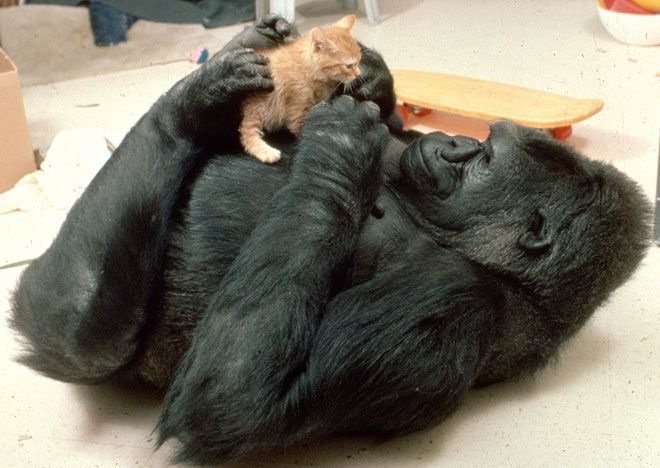 26 Wild Animals Will Surprise You With Their Softer Side ...