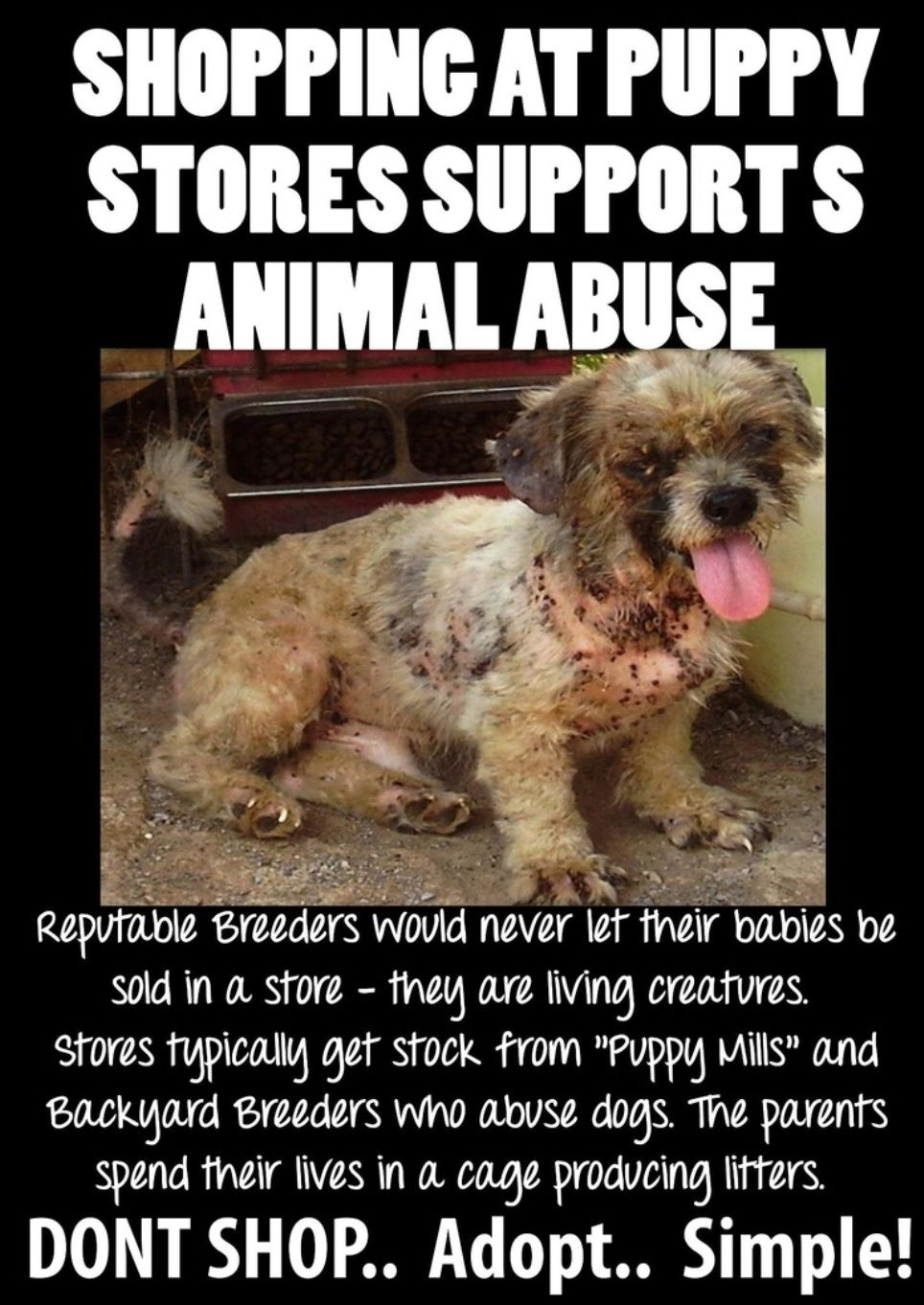 Which Pet Stores Sell Puppies Supplied By Puppy Mills Nearly 100