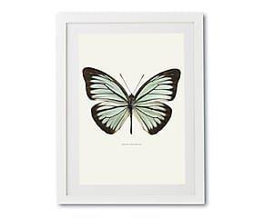 Print in lijst Pareronia Valeria, multicolour, 30 x 40 cm
