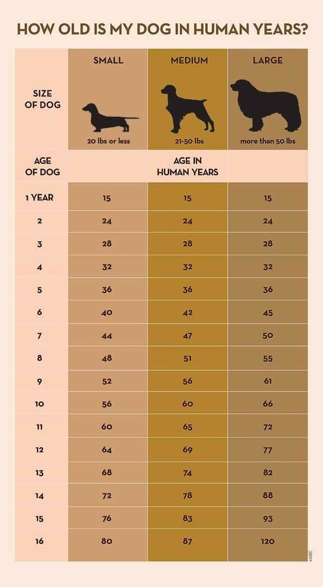 Chart to determine how old your dog is in human years