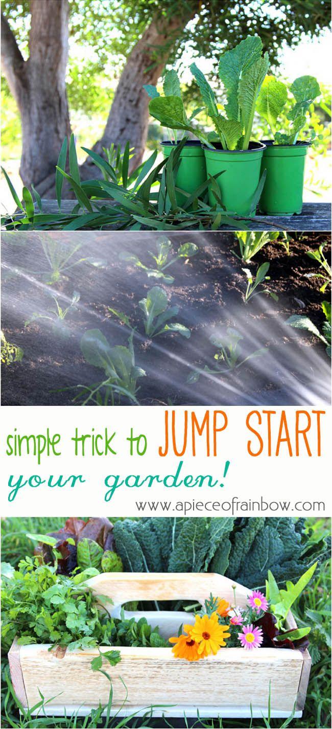Easy Trick Jump Start Vegetable Garden
