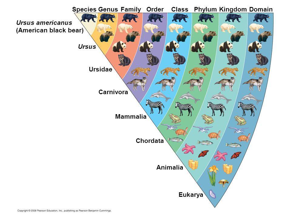 Classification worksheet ap biology