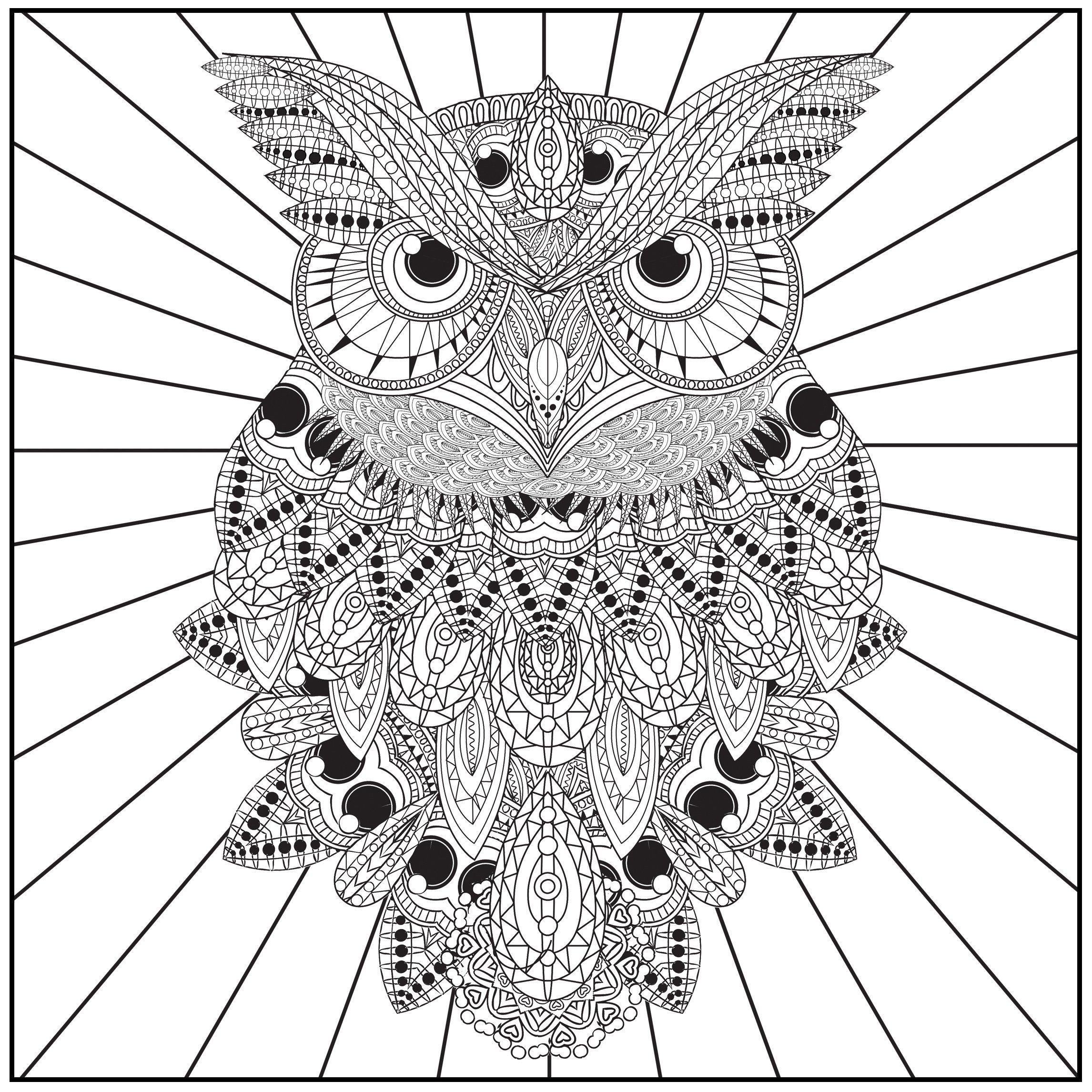 ADULT COLORING BOOK Owls Of The Night Stress