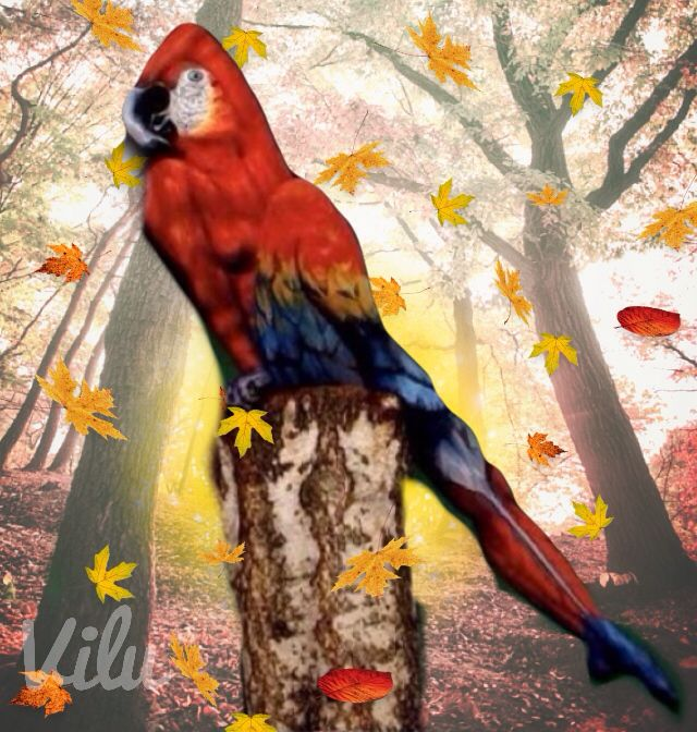 What do you see? A macaw or a woman? - Virginia Lucia Campos Mendonça