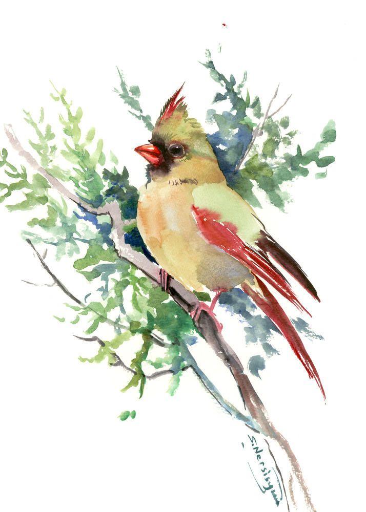 cardinal bird artwork original one of a kind watercolor bird art