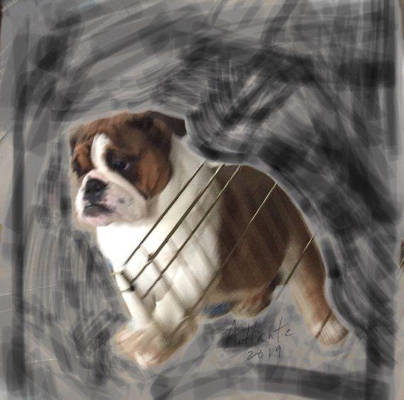 English Bulldog Gert Digital Download Bulldog Images Dogs