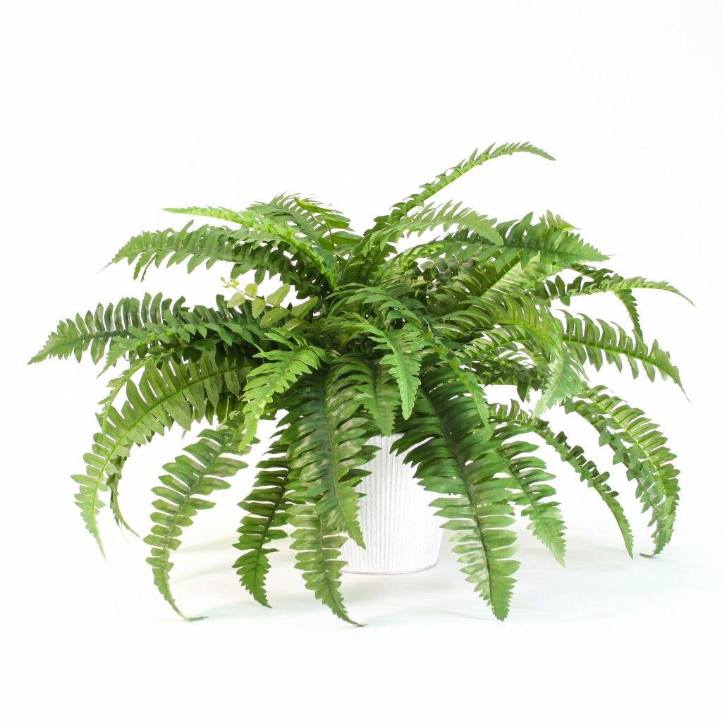 10 plantes dépolluantes pour votre salle de bain | Plantes artificielles, Decoration plante ...