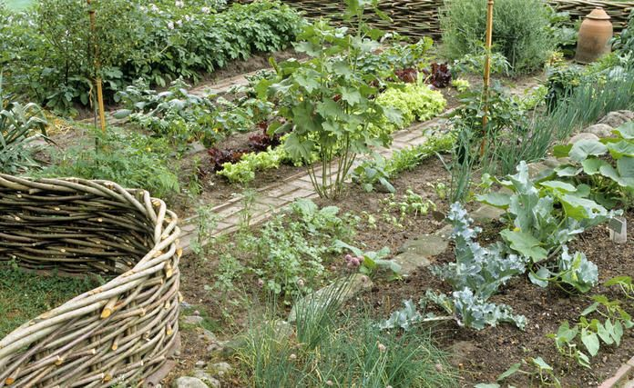 Küchengarten: Große Ernte auf kleiner Fläche #beetanlegen