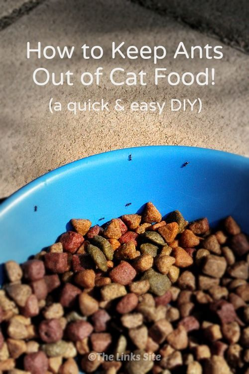 How To Keep Ants Out Of Cat Food Quick And Easy Diy