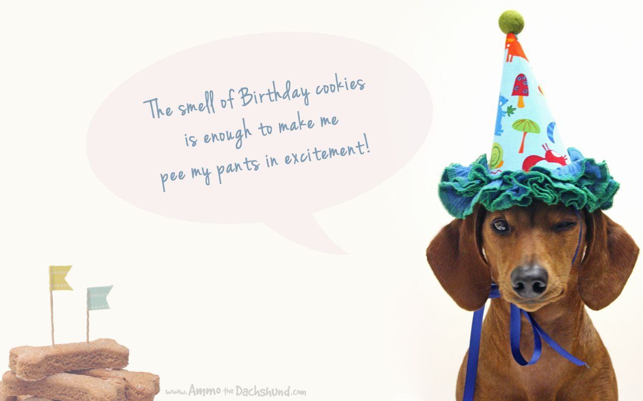 Happy birthday images with dachshunds birthday week desktop birthdays kristyandbryce Choice Image