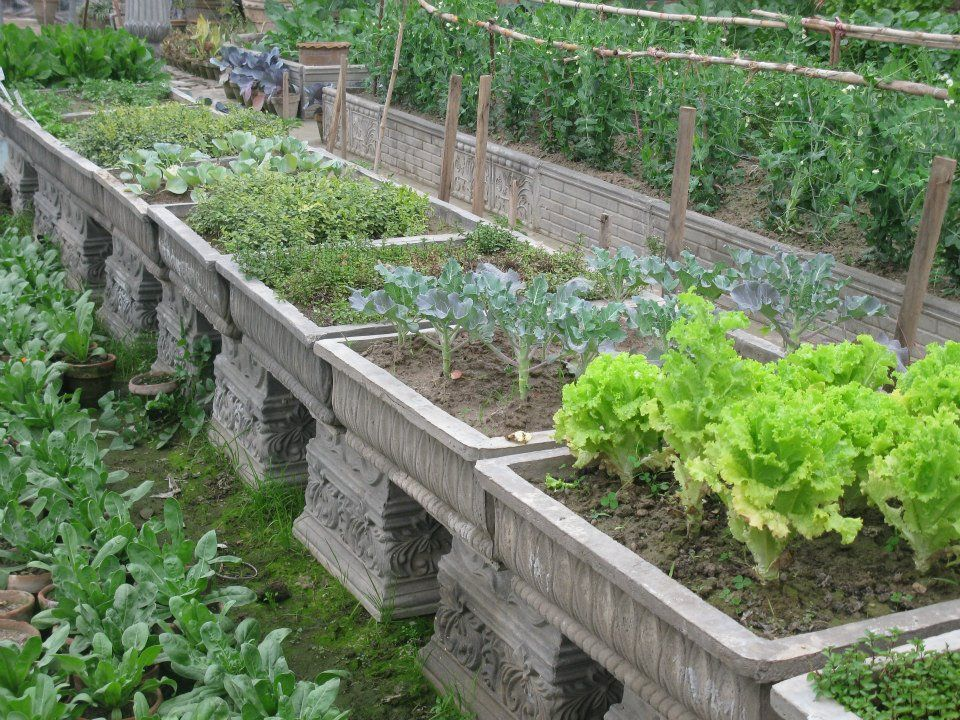 vegetable garden plants in concrete planters