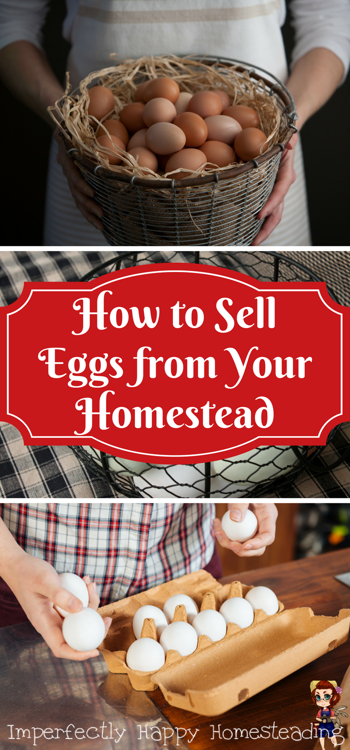 Selling Eggs From Your Backyard Homestead The Imperfectly Happy Home Selling Eggs Homestead Chickens Chicken Diy