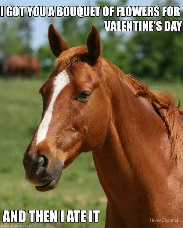 I Got You A Bouquet Of Flowers For Valentine S Day And Then I Ate It Funny Horse Memes Horses Funny Horses